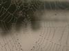 Spider_web_sm